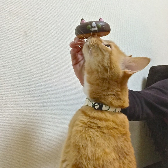 Celebrate Cat Day with Themed Donuts 11