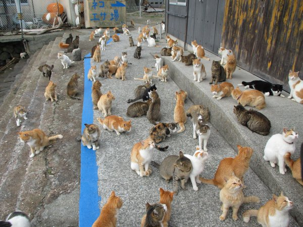 Japan's Cat Island Asks For Food And The Response Is Amazing 10