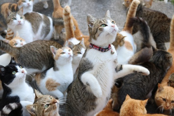 Japan's Cat Island Asks For Food And The Response Is Amazing 11