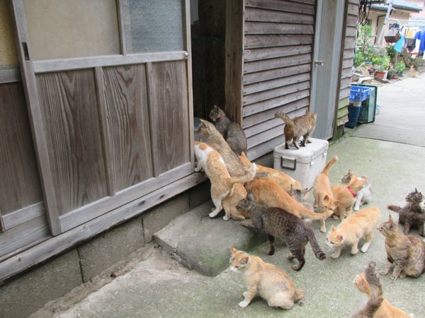 Japan's Cat Island Asks For Food And The Response Is Amazing 16