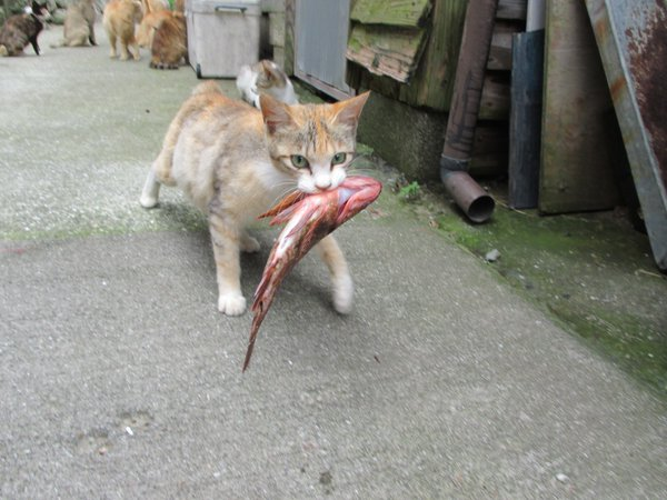 Japan's Cat Island Asks For Food And The Response Is Amazing 17