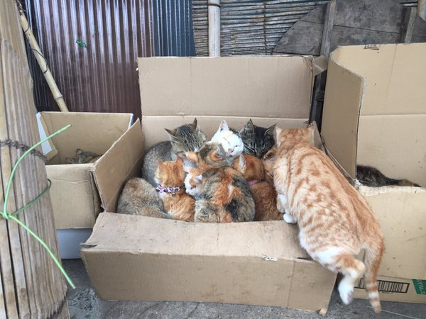 Japan's Cat Island Asks For Food And The Response Is Amazing 19