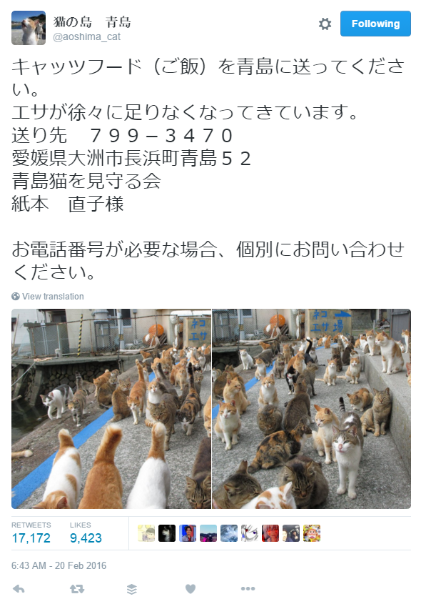 Japan's Cat Island Asks For Food And The Response Is Amazing 3