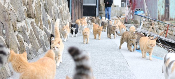 Japan's Cat Island Asks For Food And The Response Is Amazing 9